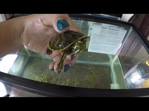 How to Clean a Turtle/Fish Tank