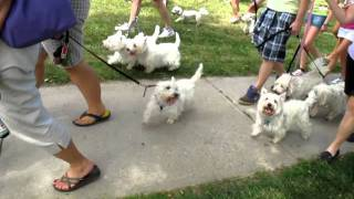 2011 Toronto Westie Walk And Rescue Fun Day
