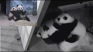 2021-02-17 Xiao Qi Ji's New Nursing Spot, His Cubbie Trot, & The Treat He Got
