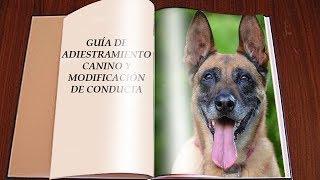 Guía básica de adiestramiento canino y modificación de conducta de perros