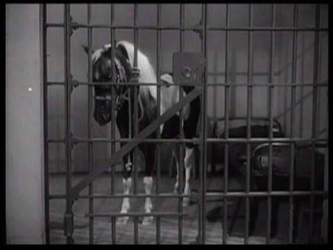 """Lassie - """"Wishing"""" - Episode #145 - Season 5, Ep. 2 - 9/14/1958"""