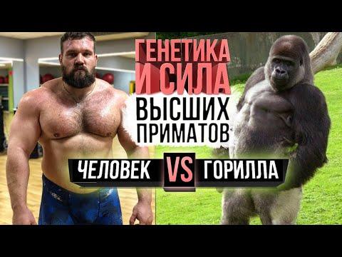 Человек против гориллы (Сила шимпанзе, орангутанга против Сарычева)