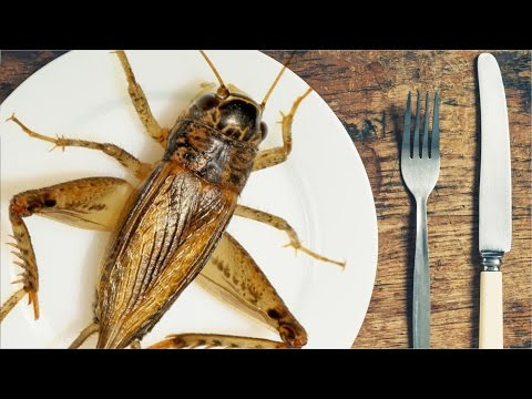 Are Crickets The Food Of The Future?