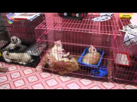 HOTEL KUCING RAUP KEUNTUNGAN JELANG TAHUN BARU - KOMPAS NEWS ACEH 31/12/2015