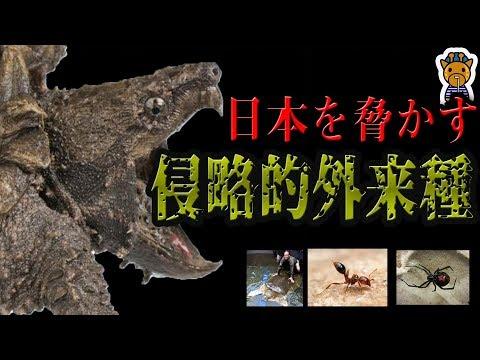 【危険】日本に迫りくる最悪の外来生物7選