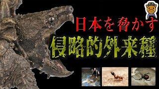 【危険】日本に迫りくる最悪の外来生物7選 thumbnail