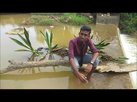Kodi Nandri Aiya / Maravaamal Ninaiteeraiya / Ulla Niraivodu Video Song by VLA Tg Malim Youths