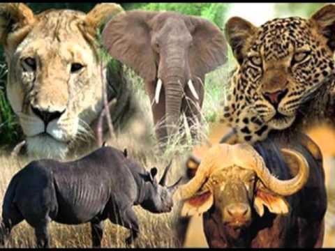 Africa trip video
