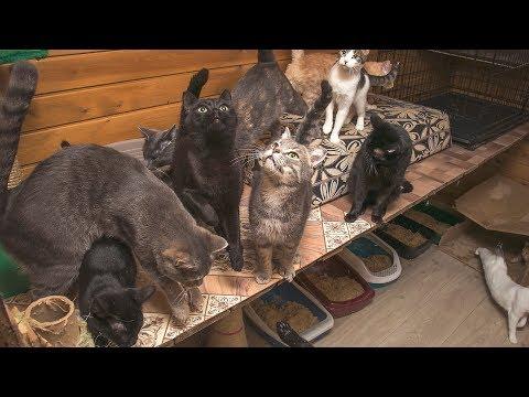 Мы существуем   Как уничтожают и как выживают волонтёрские приюты для животных в России