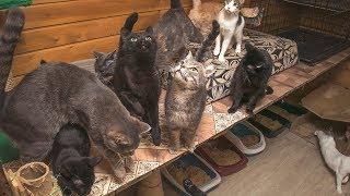 Мы существуем | Как уничтожают и как выживают волонтёрские приюты для животных в России