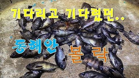 볼락낚시(기다리고 기다렸던 동해안 볼락) 시즌 시작!!