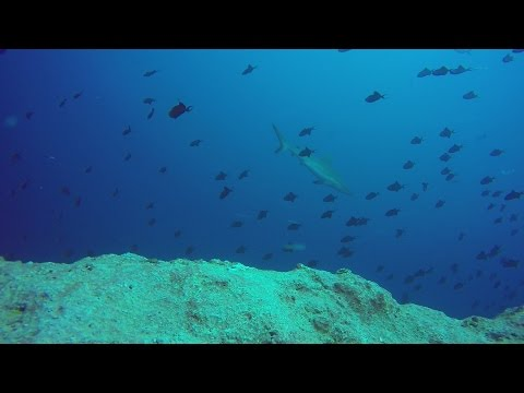 Scuba Diving and Exploring Palau and Yap