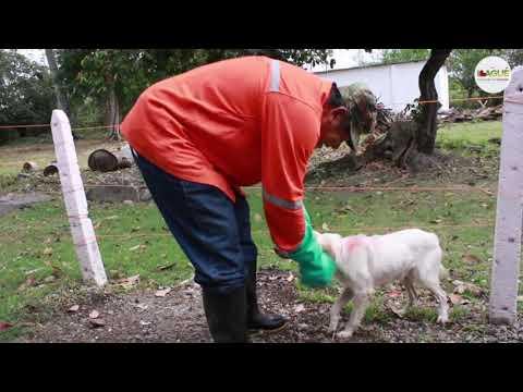 Entre el 10 y el 15 de noviembre habrá vacunación canina y felina puerta a puerta en  Ibagué