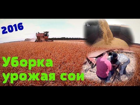 Уборка урожая сои 2016