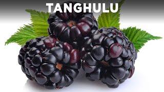 Blackberry Tanghulu