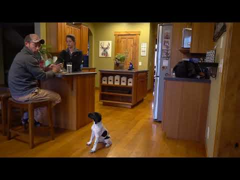 How To Train Your Puppy House Manners in the Kitchen   Upland Bird Dog Training