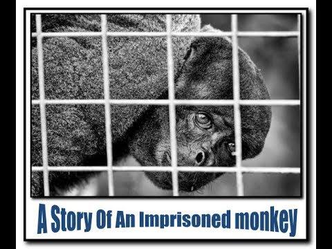 قصة قرد ملحد مسجون