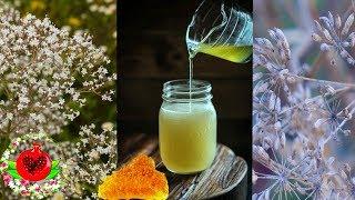 Только укроп, валериана и мед: очистить сосуды поможет проверенный народный рецепт