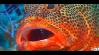 самая красивая природа мира(Это видео создано с помощью видеоредактора YouTube (http://www.youtube.com/editor), 2014-11-14T12:57:38.000Z)