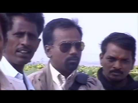 Sunflowers Crop | Bhaskara Agri Businesses