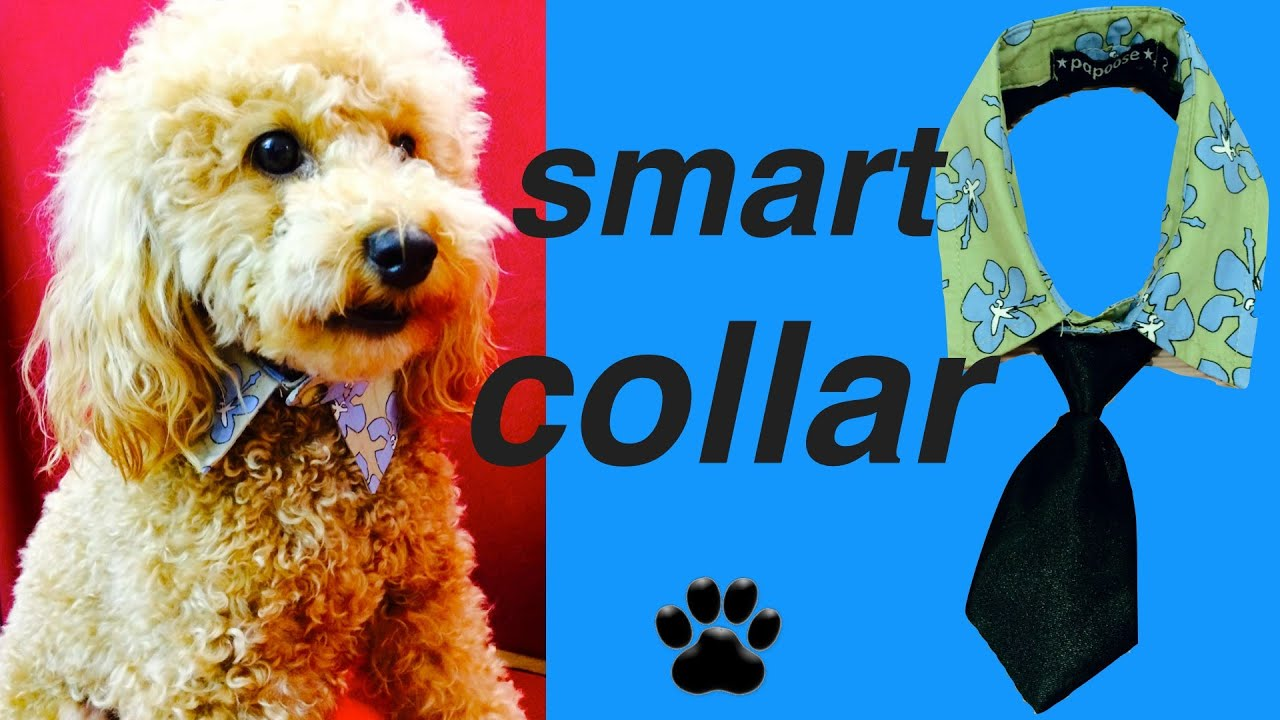 How to make dog collar upcycle shirt formal necktie diy dog food how to make dog collar upcycle shirt formal necktie diy dog foodcraft by cooking for dogs youtube jeuxipadfo Image collections