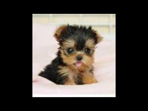 Cutest Puppy In The Universe | www.pixshark.com - Images ...