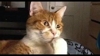 Приколы с котами Добрый позитив Видео про котов Кошки Животные Создай себе хорошее настроение