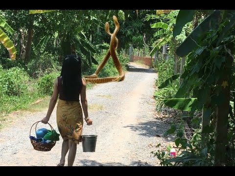 Thumbnail: Beautiful Girl Catch Big Snake Near Her House-Girl Take Bath and Meet Big Snake-Snake Attacked Girl