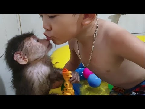 Baby Monkey | Doo Takes A Bath In An Inflatable Swimming Pool With His Brother