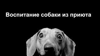 Воспитание собаки из приюта