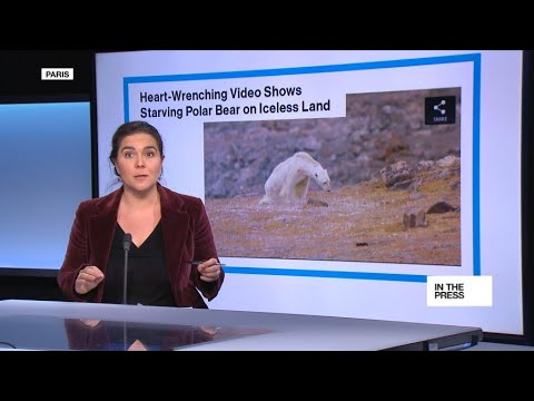 Is This Bear a Victim of Climate Change? Maybe, But Maybe Not