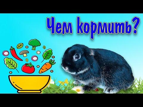 Питание декоративных кроликов