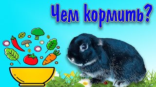 Питание декоративных кроликов, чем кормить кролика