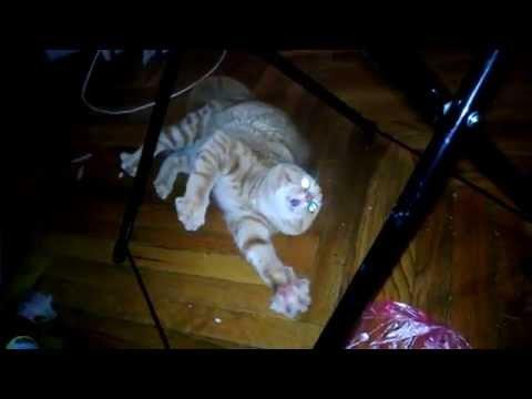 Вой Вой Вой... Бедный котейка :3