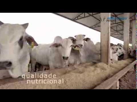 Grupo Bom Futuro Pecuária