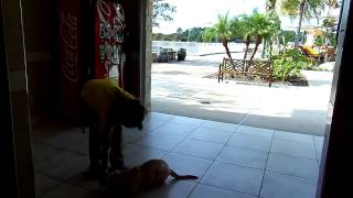 Labrador Puppy Training Ben Treat Training