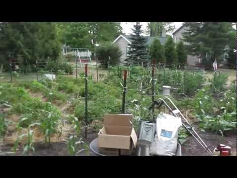 Michigan Garden 5 Politics & Vegetables