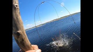 Рыбалка на паук САЗАНЫ МОНСТРЫ