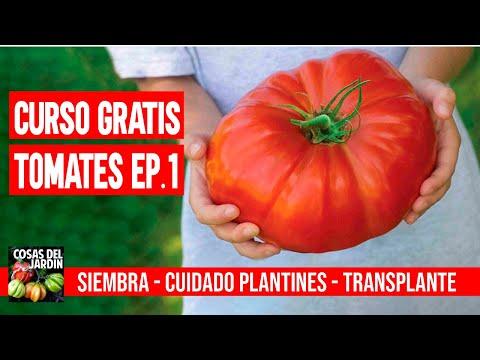 CURSO GRATUITO TOMATES EP. 1 - COMO PLANTAR TOMATES EN CASA #CURSOTOMATESCDJ