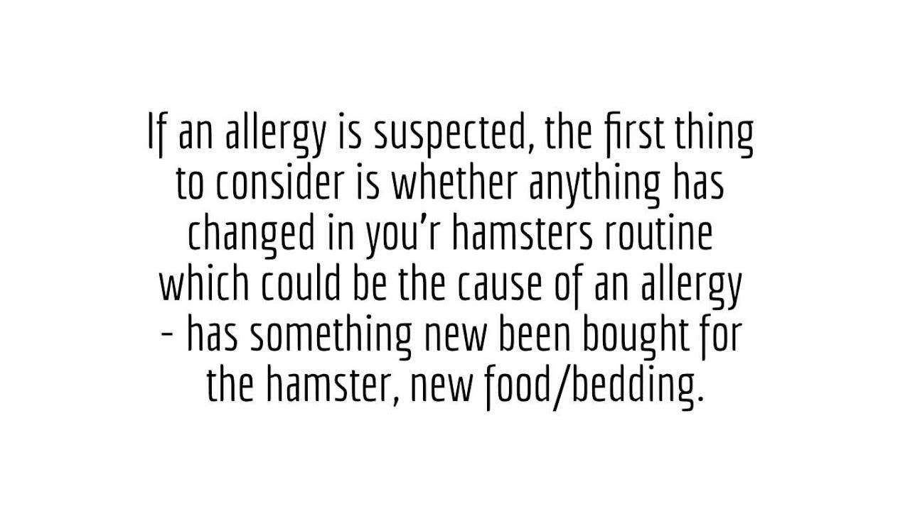 Hamster Illnesses: Allergy - YouTube