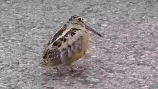 Bobbing bird- Walk like an egyptian
