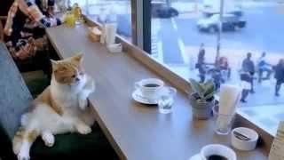 Крутой кот сидит в Кафешке!Умный кот пьет чай!
