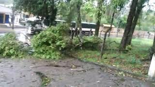 Vendaval causa estragos em Jaraguá do Sul