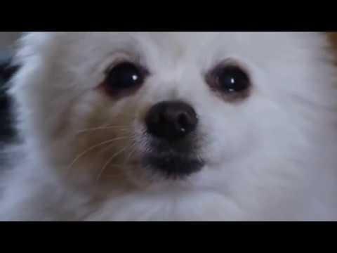 Gabe The Dog | My Time - bo en