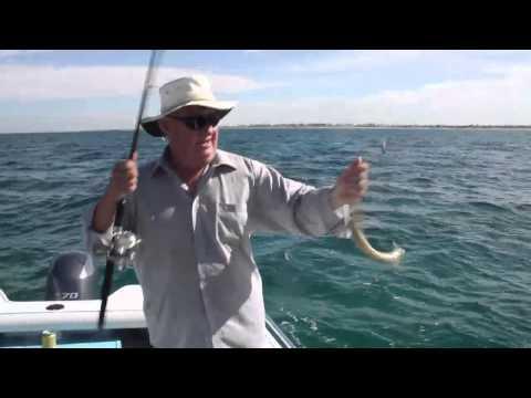 Greg James Fishing Adelaide Metro - West Beach Whiting and Gar