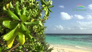 Tropical Island - Maldives - 4K(Soothing video from the Maldivian resort