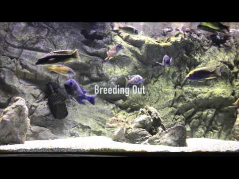 My Fish Has Black Spots?