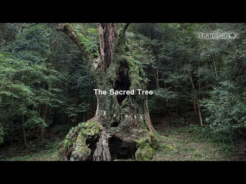 The Scared Tree