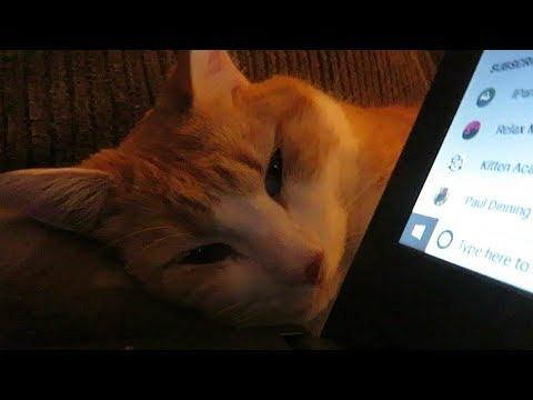 Cute Cat Uses Little Pillow