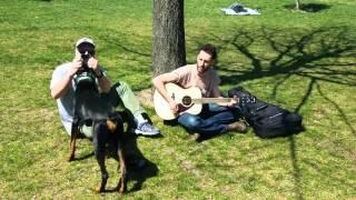 Guitar playing Doberman Pinscher peaceful day Juniper Valley Park Queens New York